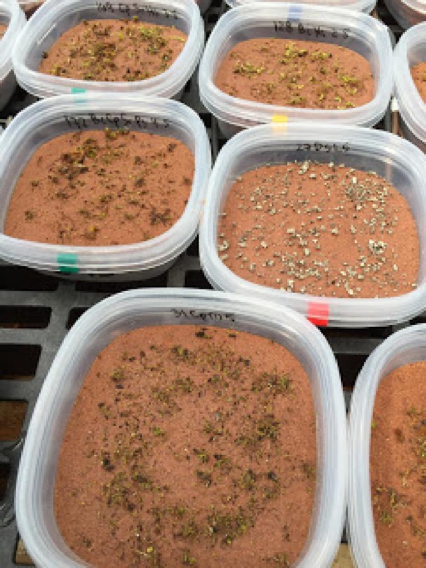 Greenhouse-grown crust
