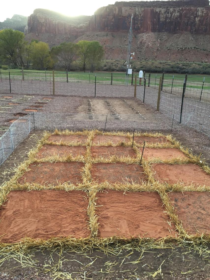 straw-checkerboard-restoration